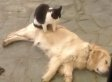 Watch These Kind Kitties Put Their Paws To Work To Give Their Canine Buddies A Massage