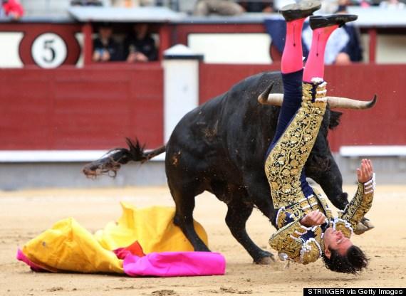 matador gored
