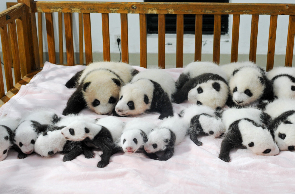panda crib