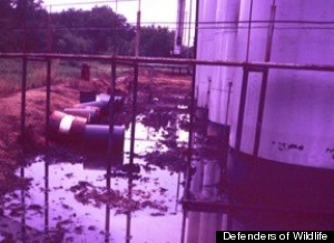 leaking oil drums