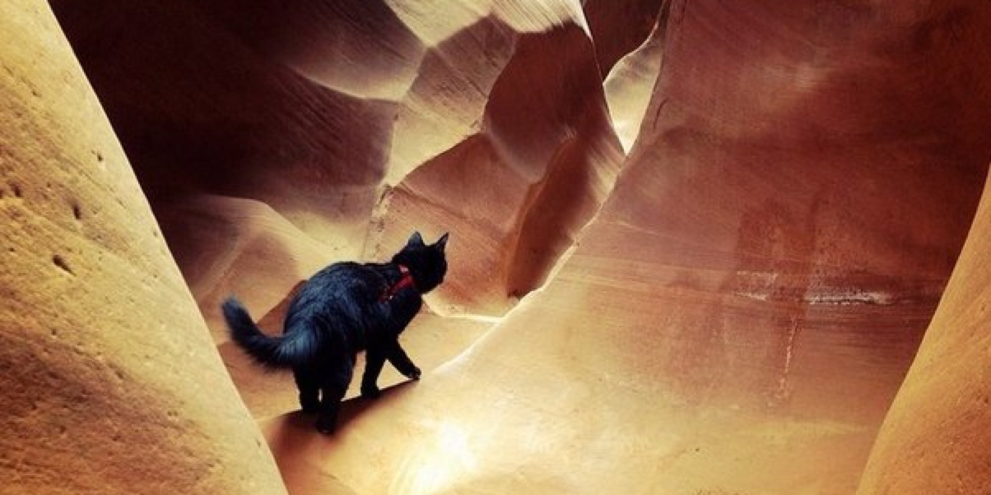 Meet Millie The Rock Climbing Adventure Cat Who Goes