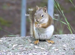 And Now, A Bunch Of Adorable Animals With The Hiccups