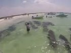 WATCH: Just A Herd Of Manatees Passing Through