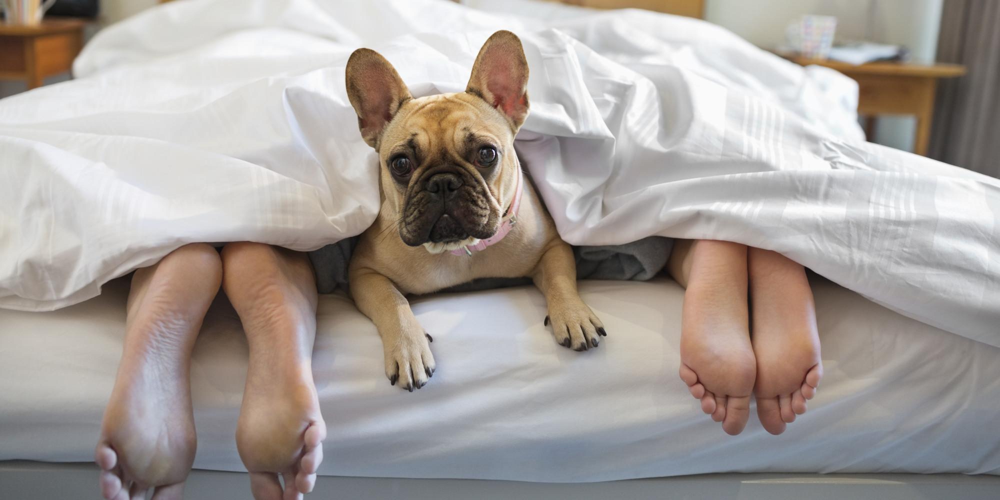 """Képtalálat a következőre: """"sleeping in dog"""""""