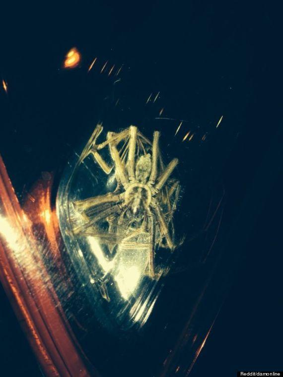 spider in headlight