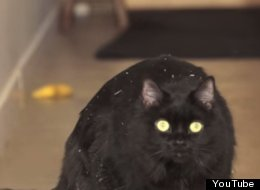 WATCH: This Cat Is Addicted. Don't Let It Happen To You.