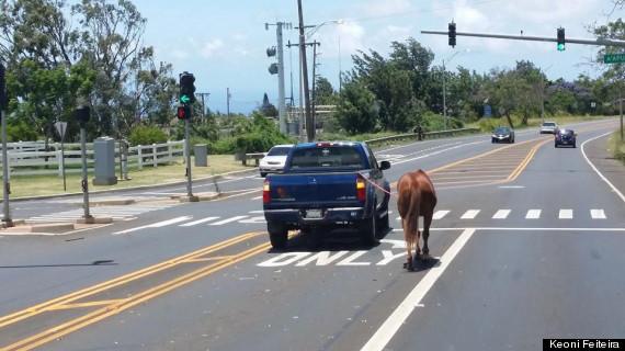 man walking horse truck