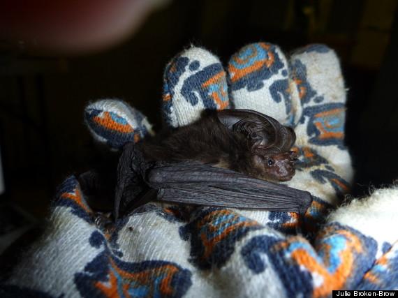 extinct bat 1