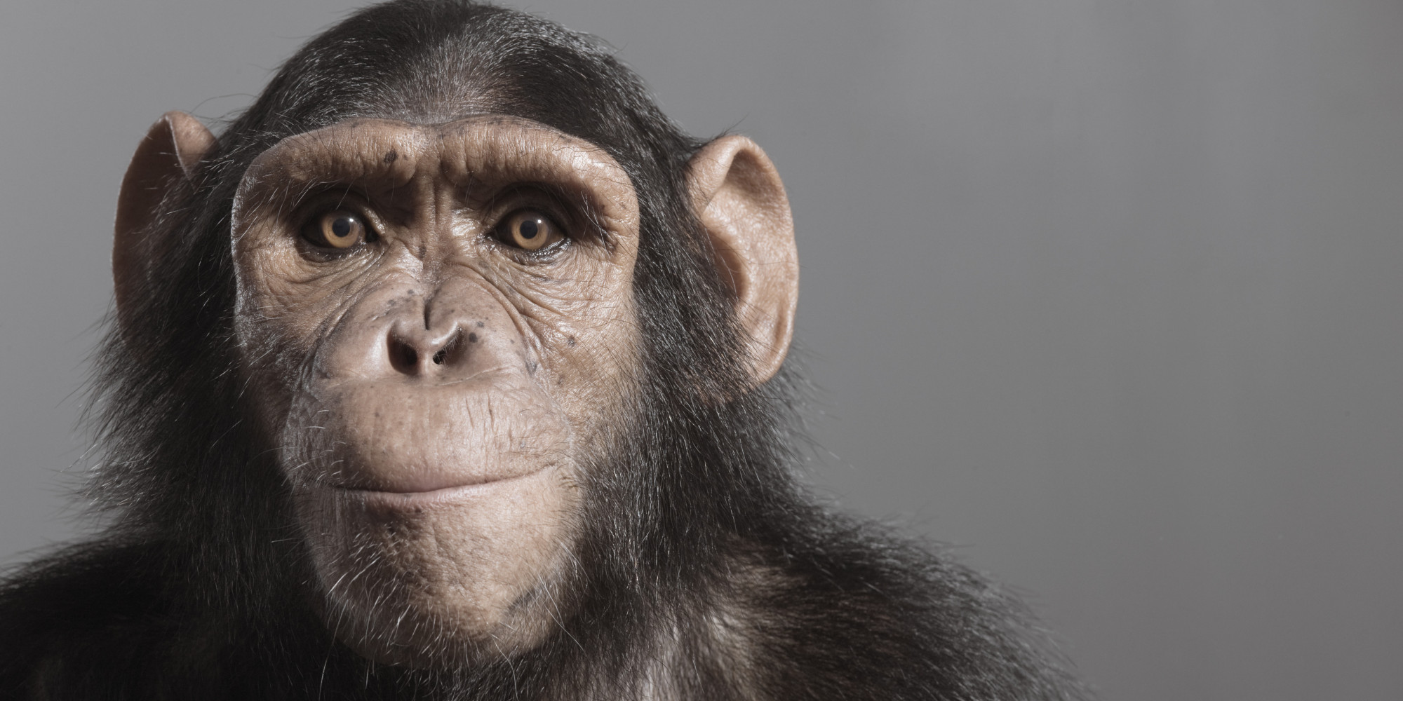 a study on the similarities and differences between chimpanzees and humans Eight striking similarities between humans and chimpanzees the study indicates that these primates have a sense of morality that is similar to that of humans.