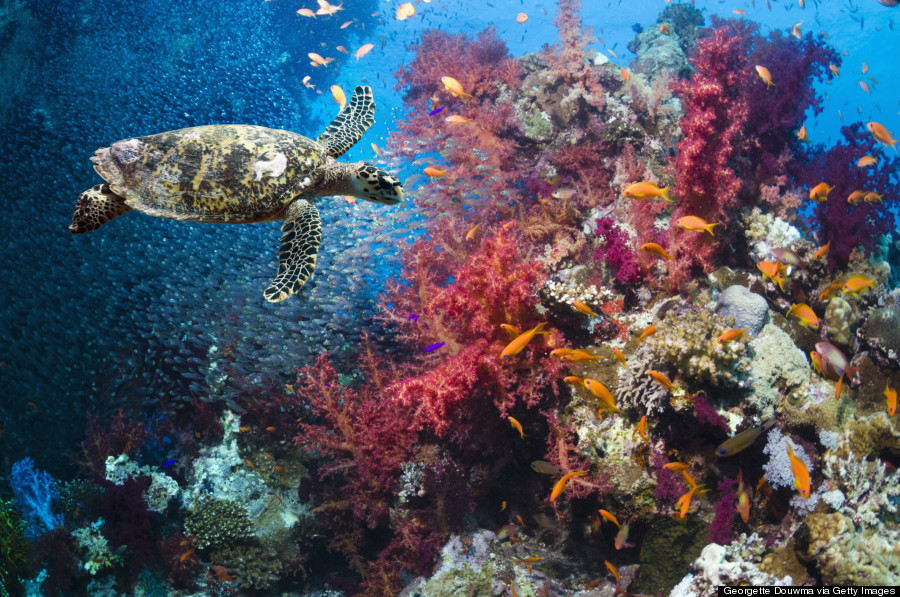 16 Reasons To Love And Respect The Ocean Huffpost