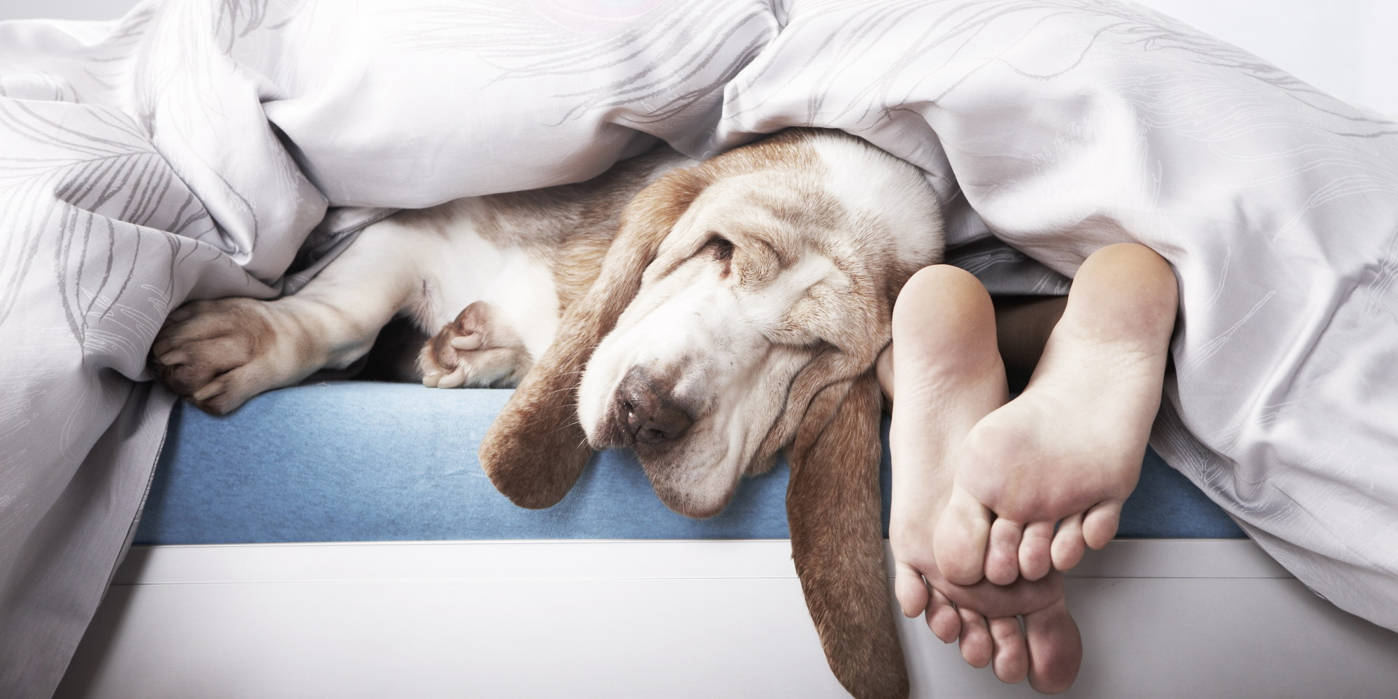 Dormir avec votre chien ou votre chat est vraiment une - Femme qui porte une couche ...
