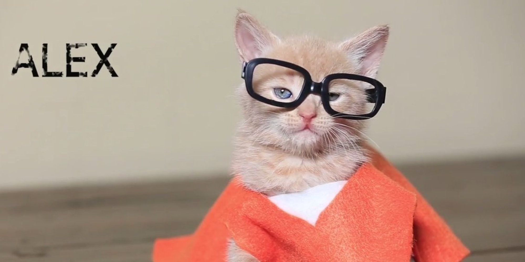 Orange is the new black with kittens is the purr fect way to start