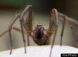M.V. Altavia, Spider-Infested Ship, Turned Back From Guam