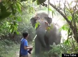 WATCH: What Do You Do When An Elephant Charges At You? This.