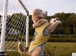 WATCH: It's The Animal World Cup!