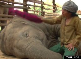 WATCH: Even Elephants Can't Resist A Good Lullaby