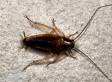 Roach Makes Unfortunate Appearance At Pest Control Chief's Testimony