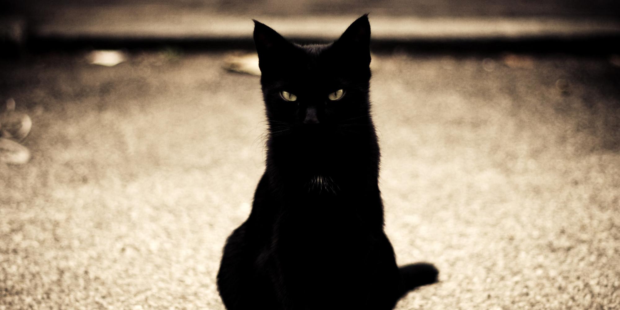 В пятницу 13 стоит остерегаться черных кошек