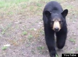 WATCH: 'Pawzing Workout...': Black Bear Chases Two Canadian Joggers