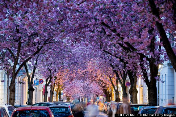 The Perfect Time To Catch These Flowers In Full Bloom Huffpost Life