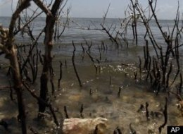 Gulf Oil Spill Damages