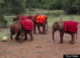 You Could Watch The World Cup Right Now, OR You Could Watch These Baby Elephants Play Soccer