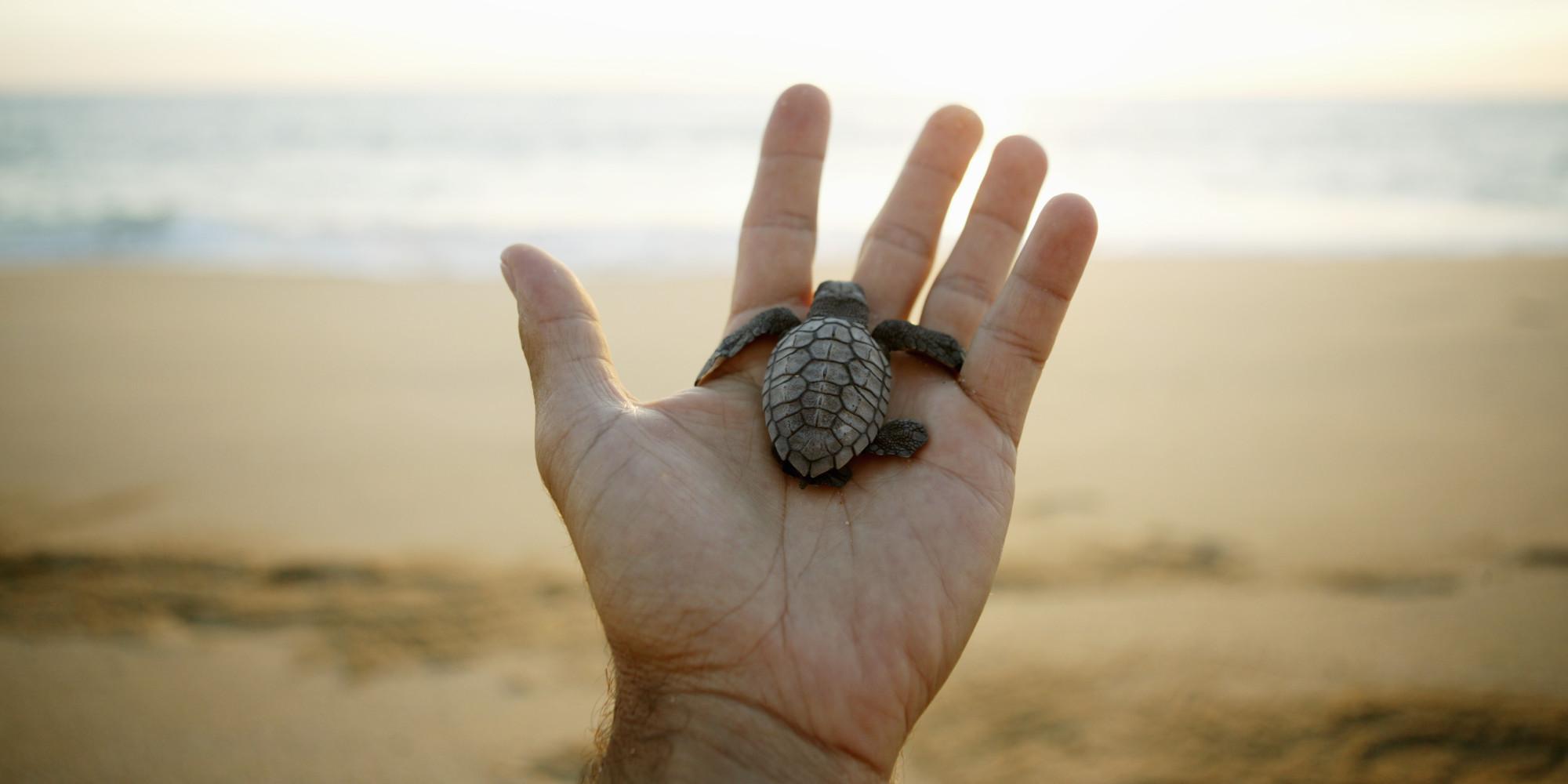 Leatherback Sea Turtle Kid Facts
