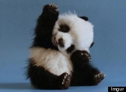 Only You Can Help These Animals Get The High Fives They Deserve