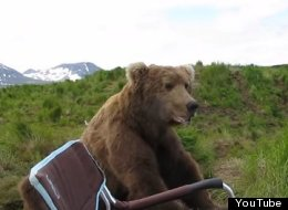 WATCH: Camper Has A Close Encounter Of The Bear Kind