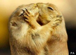 PICS: 22 Adorable Animal Kisses