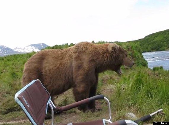 bear yawn