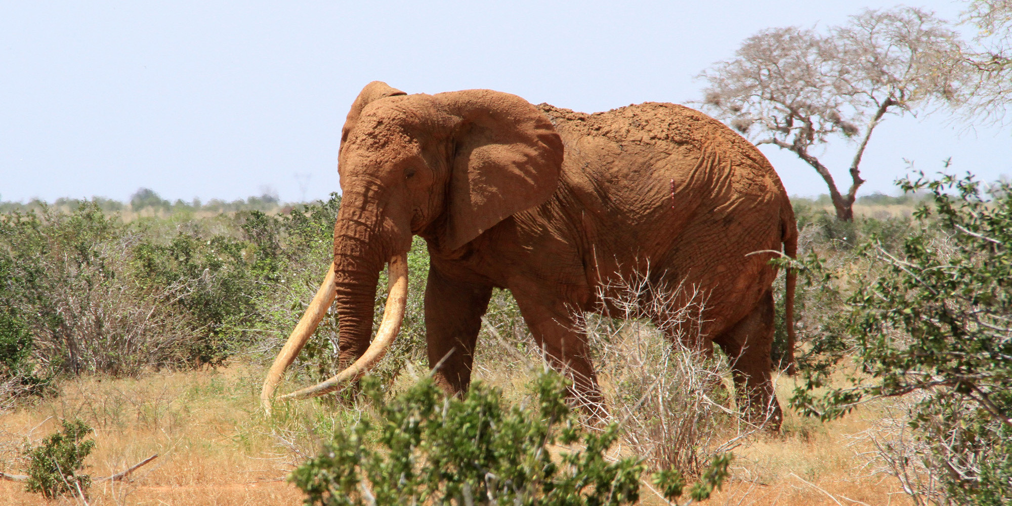 divorce in year of the elephant A gallop through the main issues for family lawyers to watch out for and, where appropriate, ask for expert input, a divorce law blog with updates on family law, high profile divorce cases.