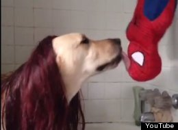 WATCH: The Famous Upside-Down Spider-Man Kiss, Reenacted By A Dog