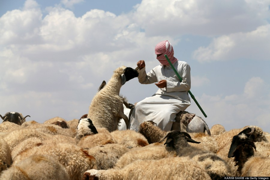 an iraqi shepherd