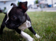 8 Reasons To Give THIS Herb To Your Pet (PHOTOS)