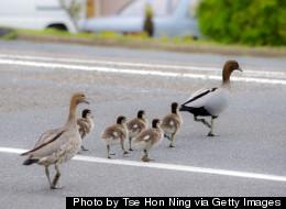 Renten-Enten: Riskanter Wahlkampf zu Lasten der nächsten Generation
