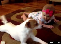 WATCH: Dog Teaches Baby How To Crawl