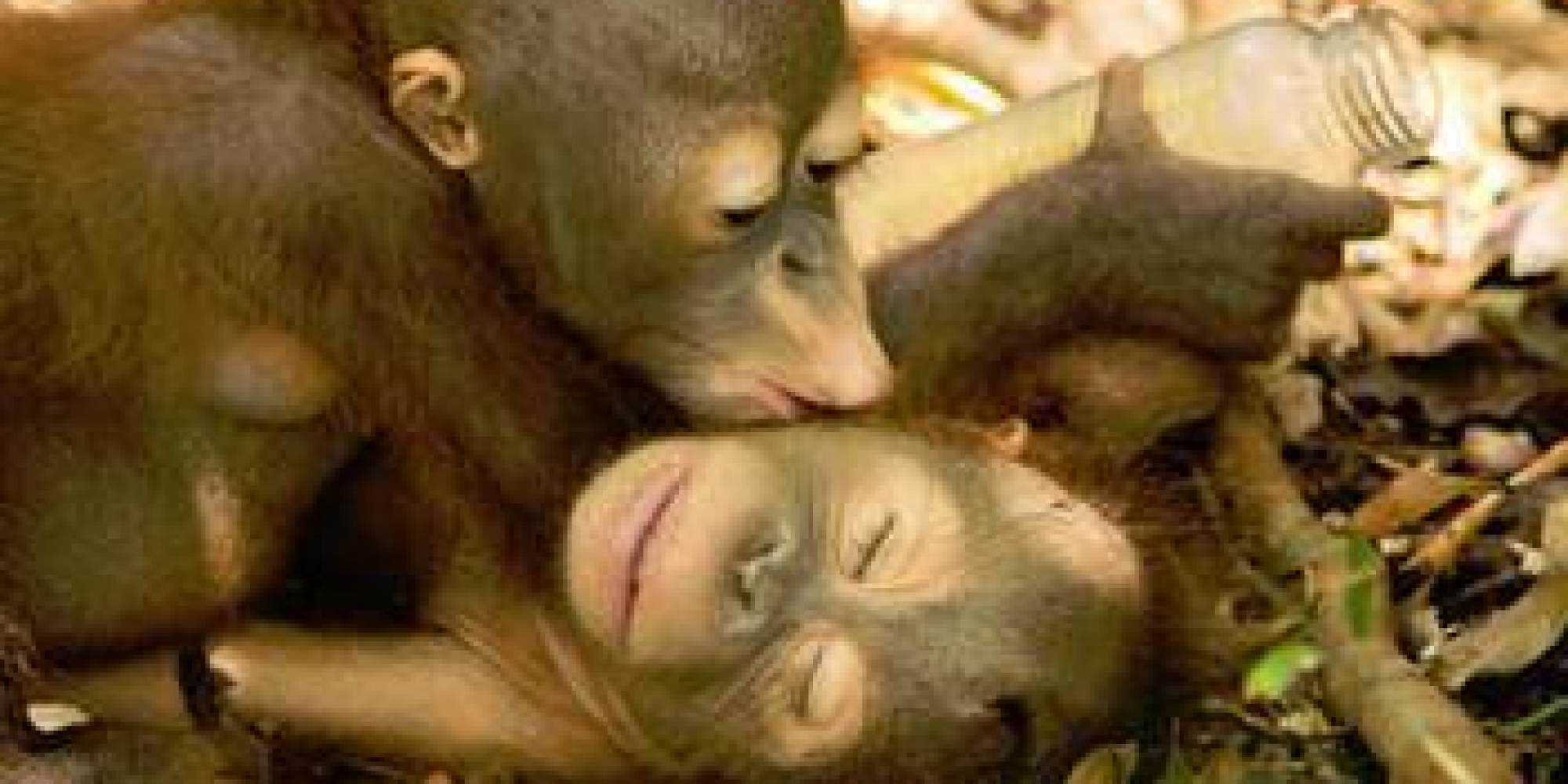 Sex xxx orangutan sex wifes