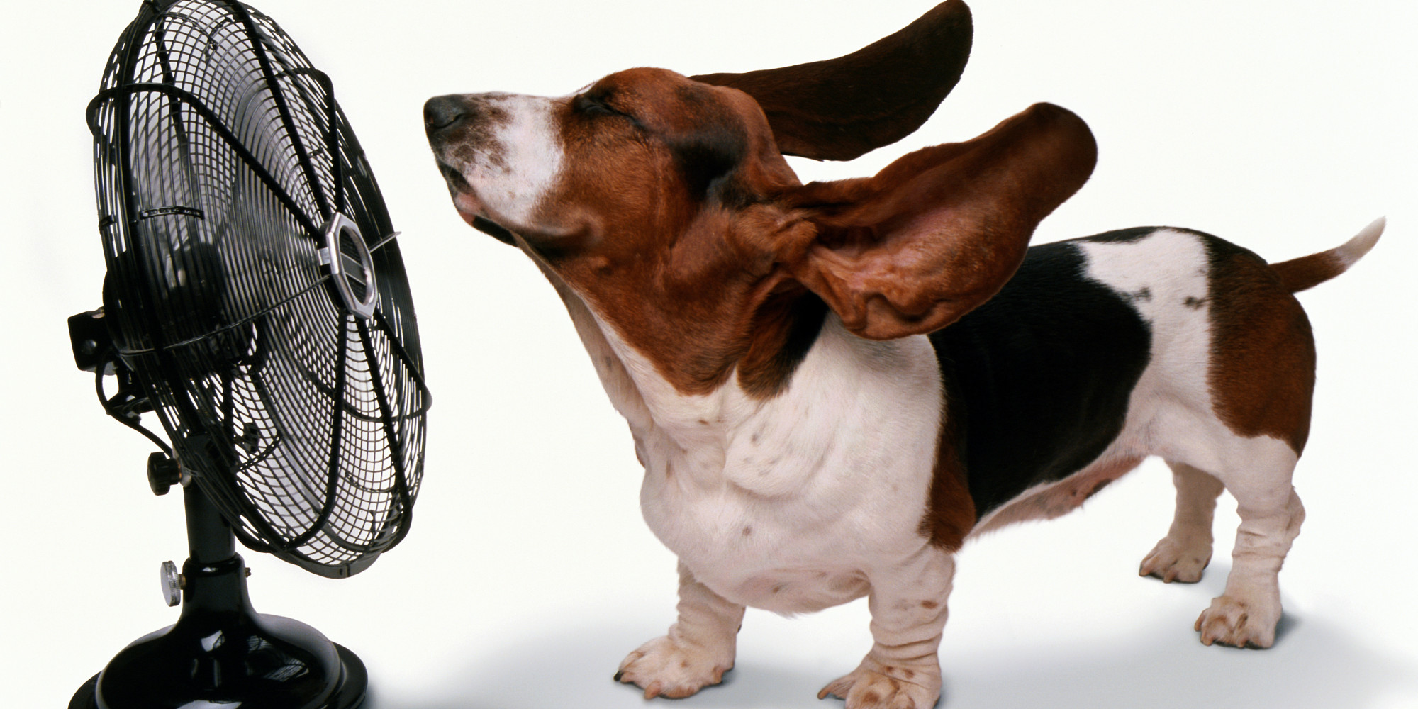 How To Keep A Dog Cool In A Hot Room