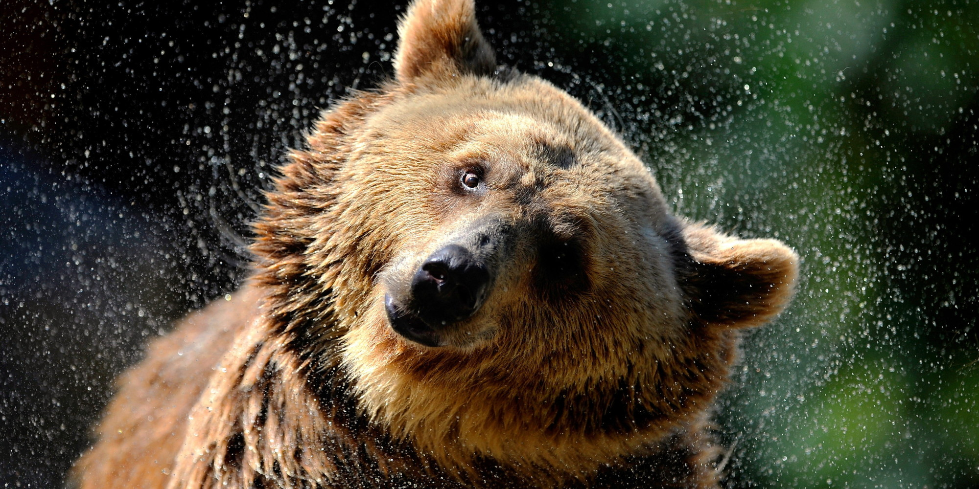 Gone Too Long: It's Time to Return Grizzly Bears Across ... - photo#34