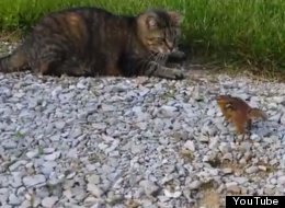WATCH: Cat Catches Chipmunk, Chipmunk Takes Revenge