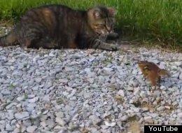 WATCH: Cat Catches Chipmunk, Chipmunk Takes Revenge