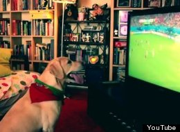 WATCH: Dog Celebrates Portugal's Last-Minute Goal Against USA