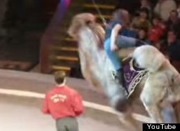 WATCH: Woman Tries To Ride Circus Camel, Things Go Slightly Wrong