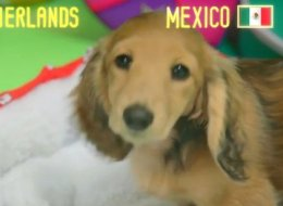 WATCH: Psychic Puppy Makes Her Next World Cup Prediction!
