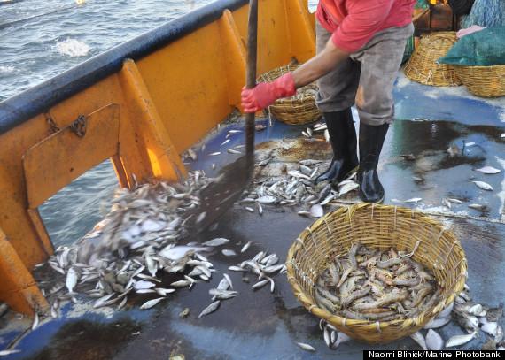 bycatch waste