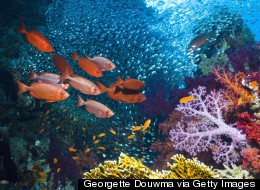 The Effects of Climate Change On Coral Reefs and Women at Jacques Cousteau's Underwater Reserve, Guadeloupe