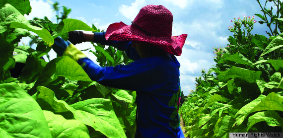 child tobacco labor