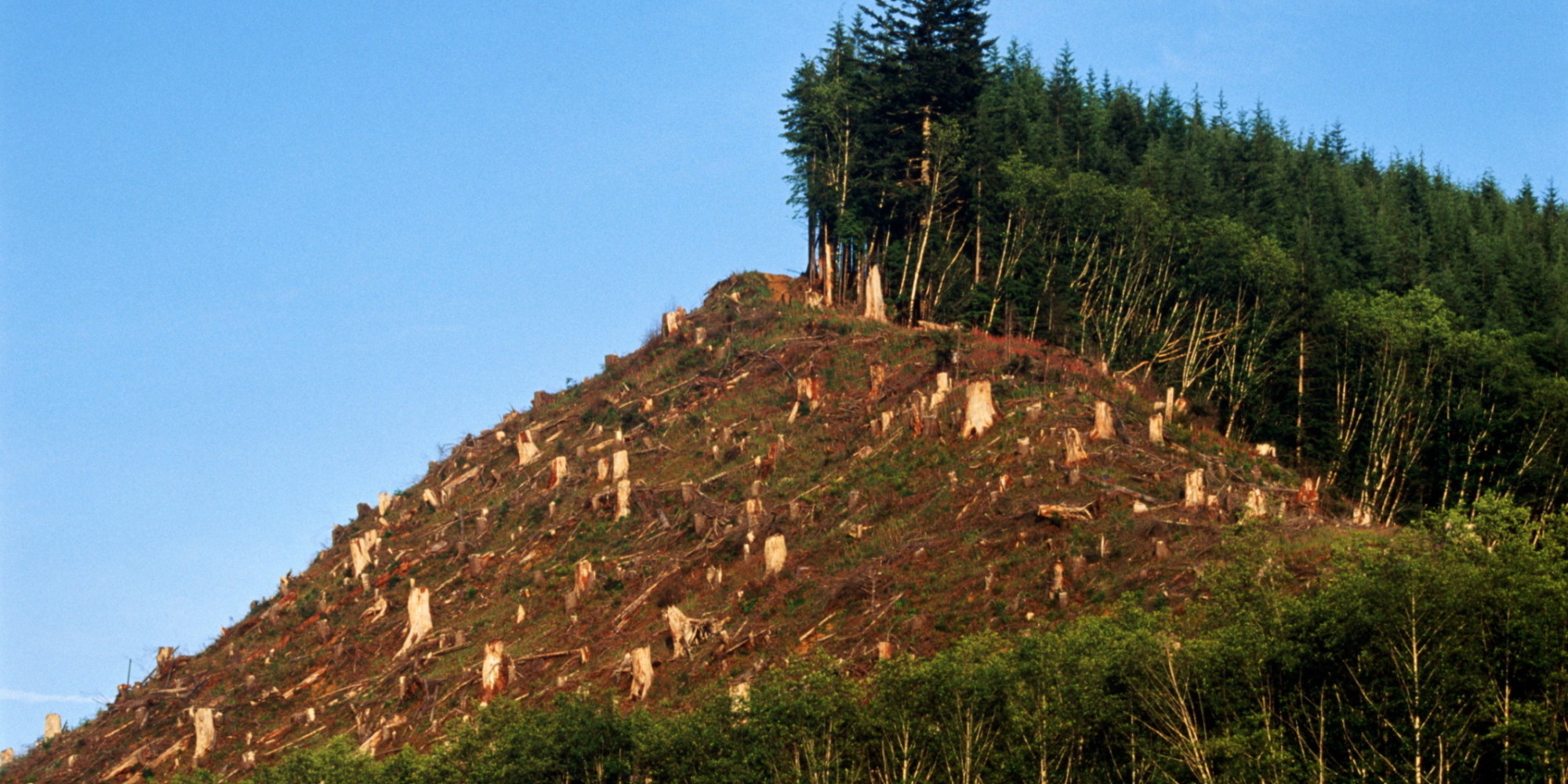 Deforestation: The Over-Looked Climate Driver and What You Can Do ...