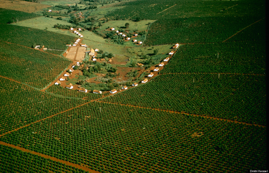 brazil coffee fields